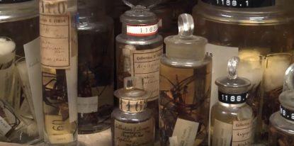 Quelques trésors du Muséum national d'Histoire Naturelle ©
